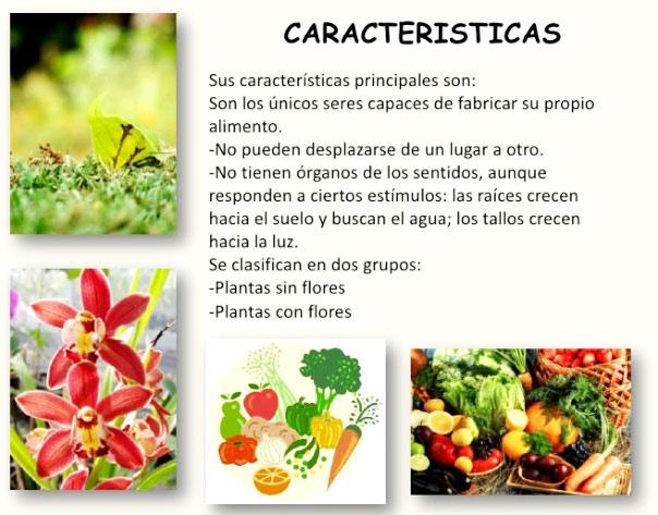 Características generales del reino vegetal