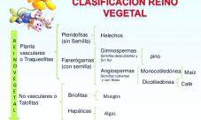 Clasificación del reino vegetal