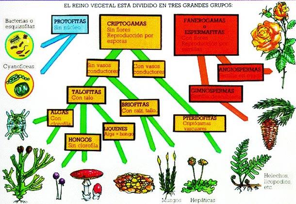 Ejemplos del reino vegetal