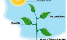 Cuál es la nutrición del reino vegetal