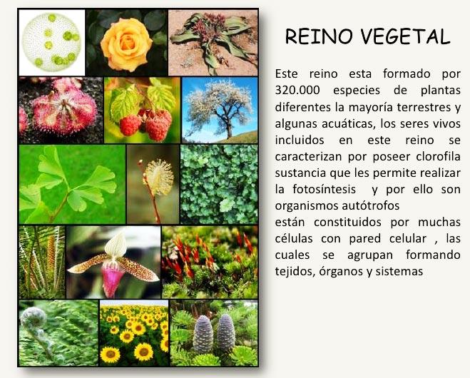 Qué es el reino vegetal