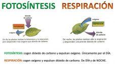 Cómo es la respiración del reino vegetal