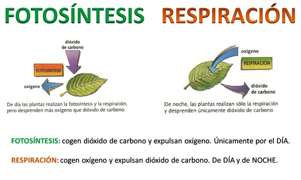 diferencia entre procesos catabolicos y anabolicos