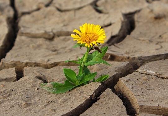 ¿Cuál es la adaptación del reino vegetal?