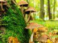 Diferencias entre el reino fungi y el reino vegetal