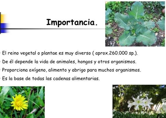 Importancia biológica del reino vegetal