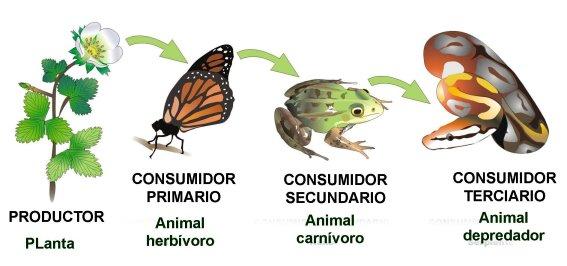 Importancia del reino vegetal en la cadena alimenticia