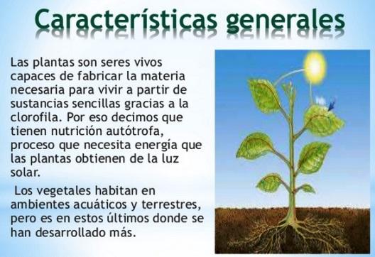 Características del reino vegetal para niños