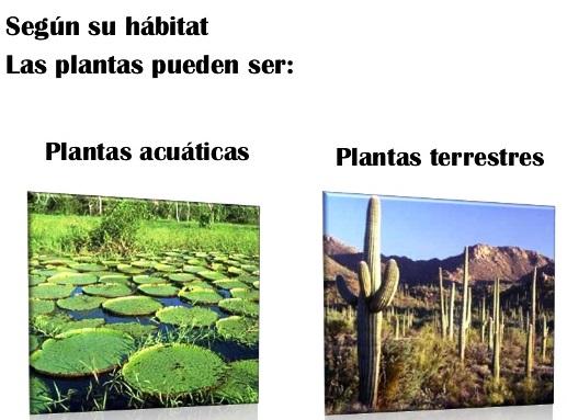 Clasificación del reino vegetal según su habitat