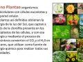 ¿Cómo obtiene energía el reino vegetal?