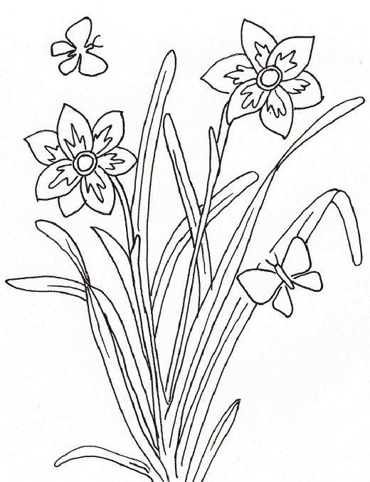 Dibujos del reino vegetal para colorear