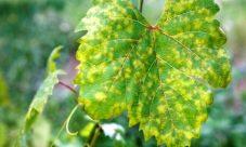 ¿Cuáles son las enfermedades más comunes en las plantas?