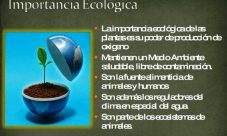 Función ecológica del reino vegetal