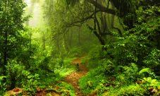¿Cuál es el habitad del reino vegetal?