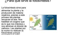 ¿Cuál es la importancia de la fotosíntesis?