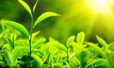 Importancia del sol para las plantas