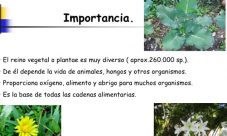 Importancia ecológica del reino plantae