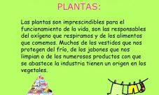 ¿Cuál es la importancia de las plantas para la vida en el planeta?