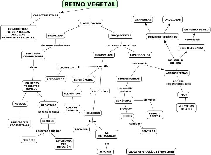 Mapa conceptual del reino vegetal