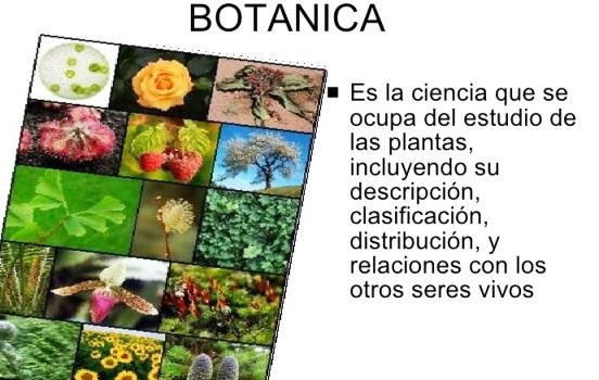 ¿Cuál es el objeto de estudio de la botánica?