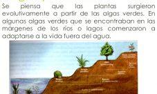 ¿Cuál es el origen del reino vegetal?