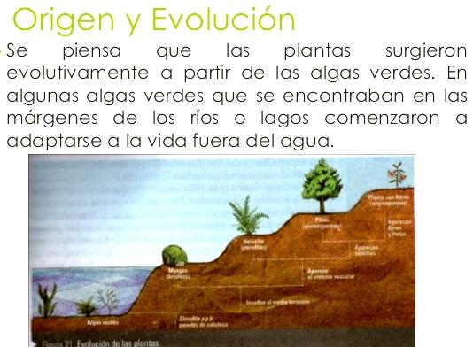 Cu l es el origen del reino vegetal reino vegetal for Origen de las plantas ornamentales