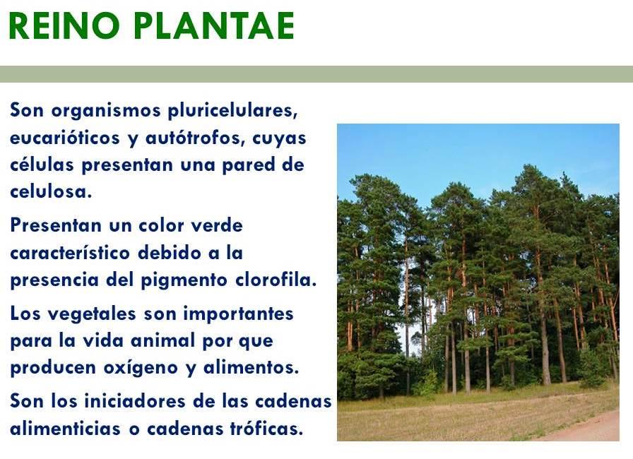 ¿Cuáles son las principales características del reino de las plantas?