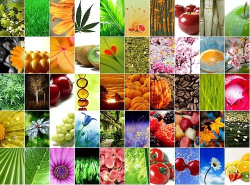El reino vegetal (resumen corto)
