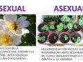 Reproducción del reino vegetal