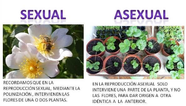 El ser humana reproduccion asexual de las plantas