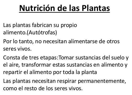 ¿Cuál es el tipo de nutrición del reino vegetal?