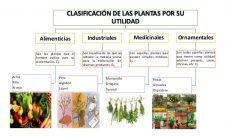 ¿Qué utilidades y usos tiene el reino vegetal?