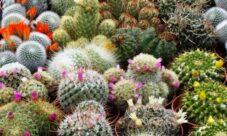 Especies vegetales en peligro de extinción en México